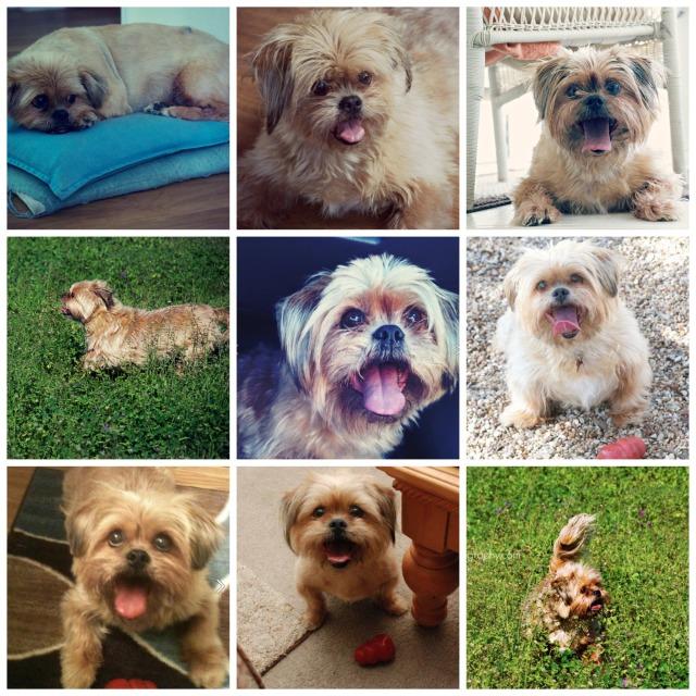Lola collage 3